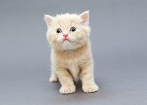 Adopt A Cat Month